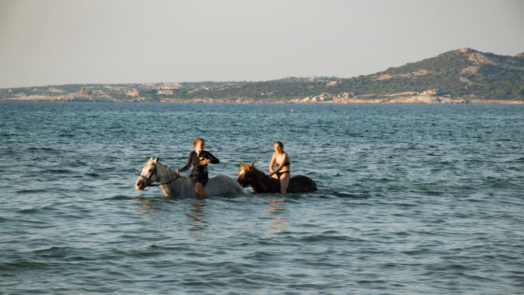 Cheval en Corse