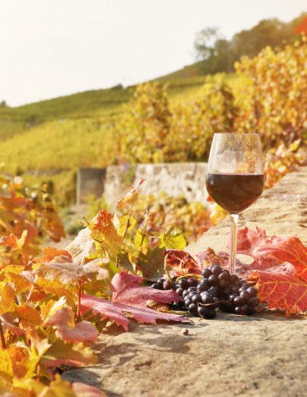 Plaisir de déguster le vin primeur