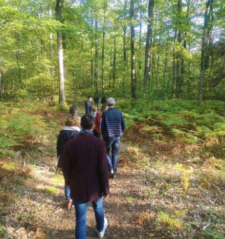 Rando en forêt