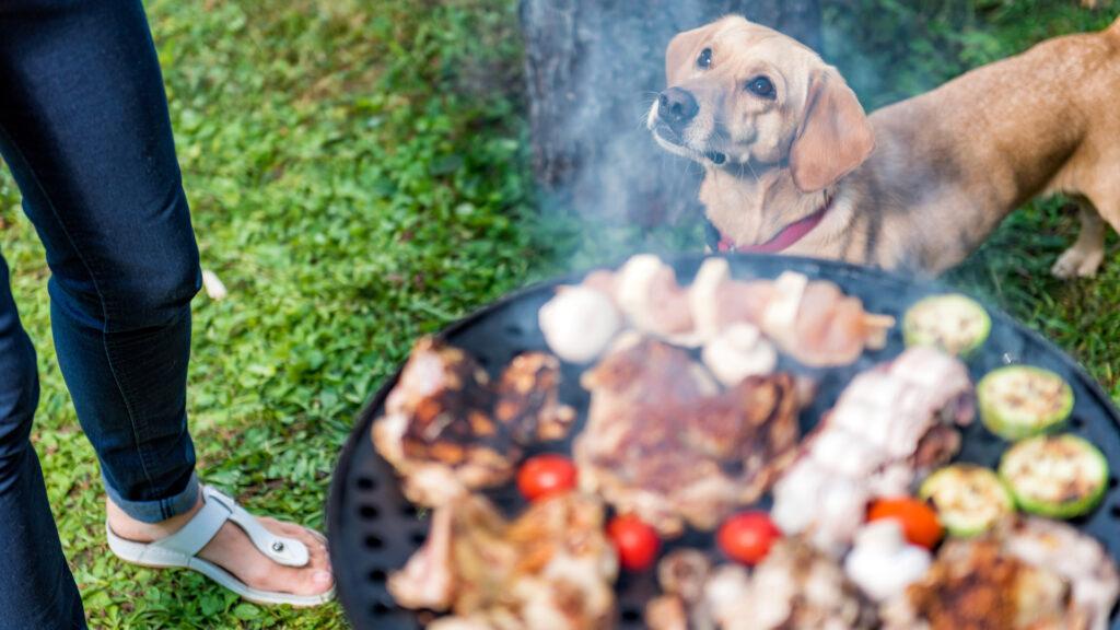 Chien en plein barbecue