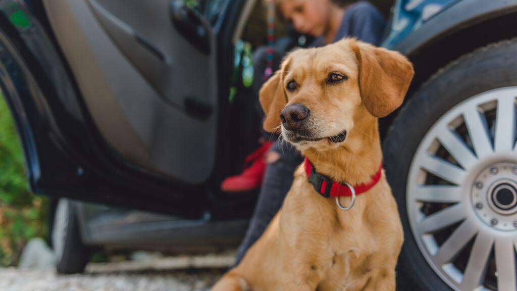 Transport du chien en vacances