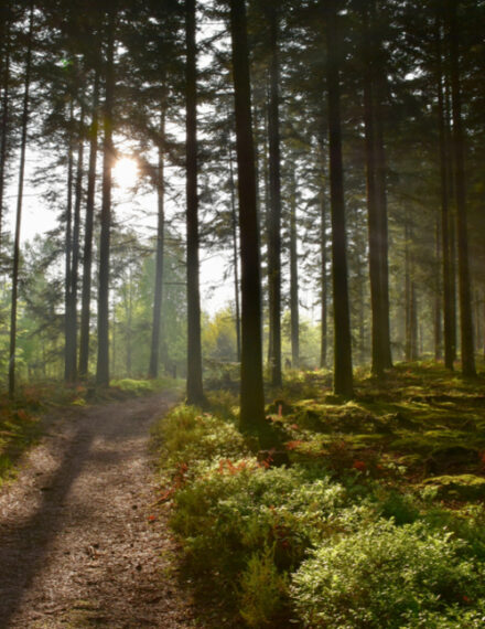 Forêt de la Sarthe