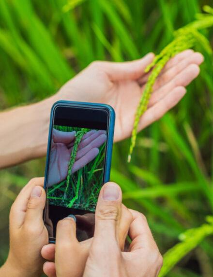 appli pour identifier les plantes