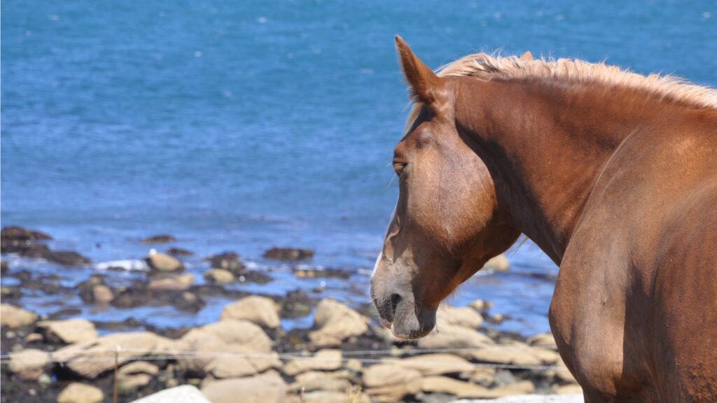 Promenade à cheval en Bretagne sur le littoral