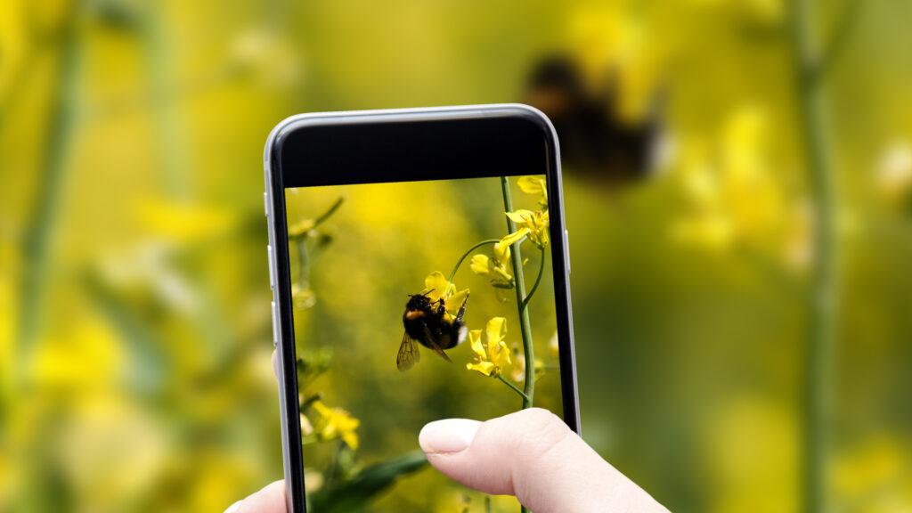appli pour identifier les insectes