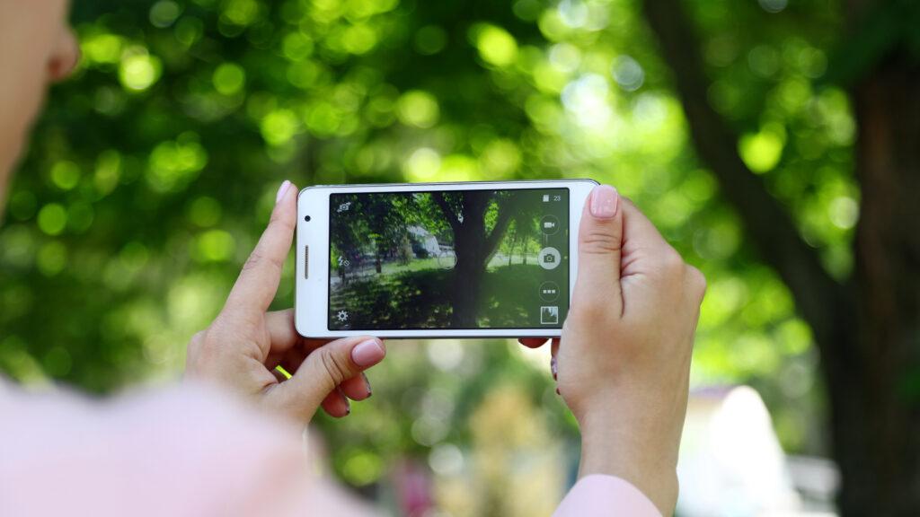 appli pour identifier les arbres