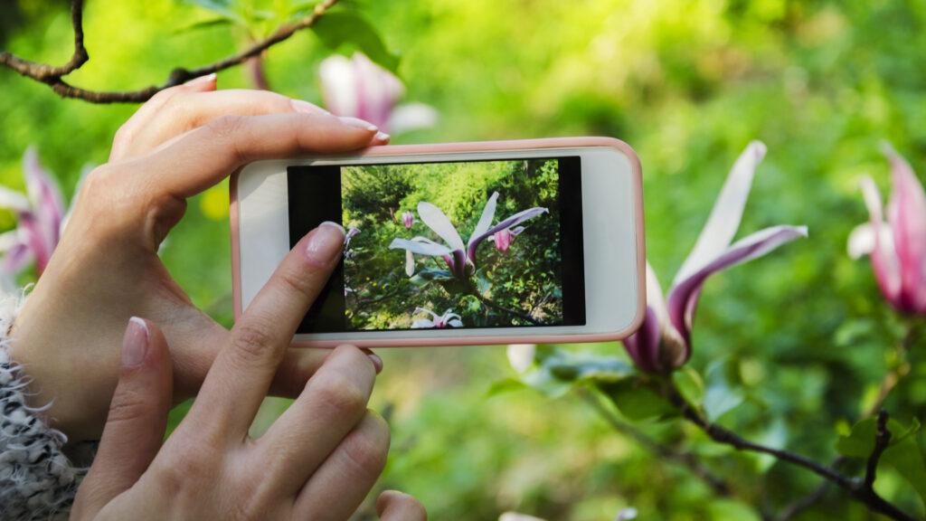 appli pour identifier les fleurs