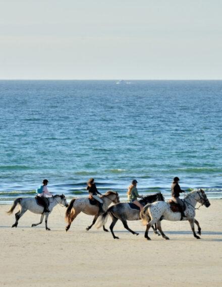 Promenade à cheval en Bretagne