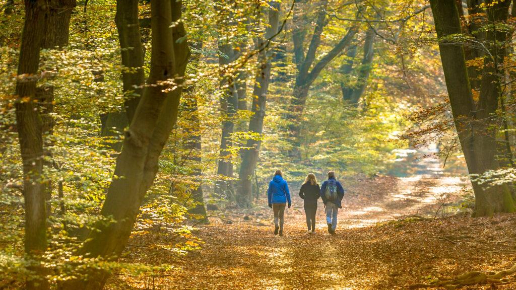 Randonnée en forêt l'automne