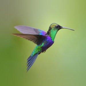 Stratégie du colibri de l'éco-voyageur