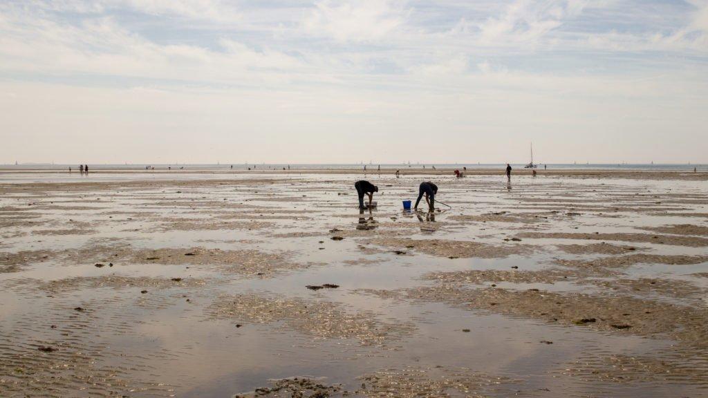 Pêche à pied en Atlantique