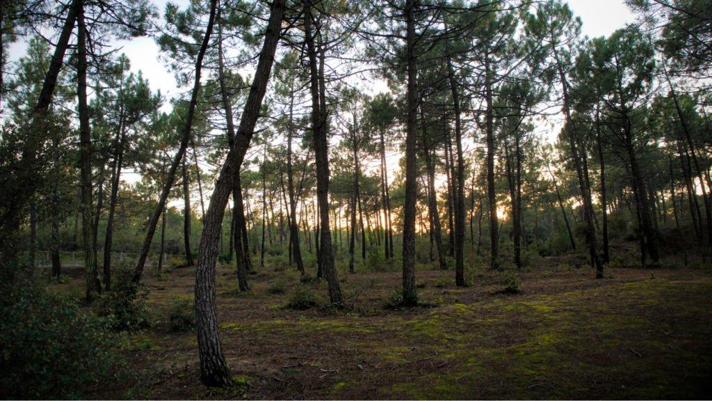 Forêt de pins et voie verte de Vendée
