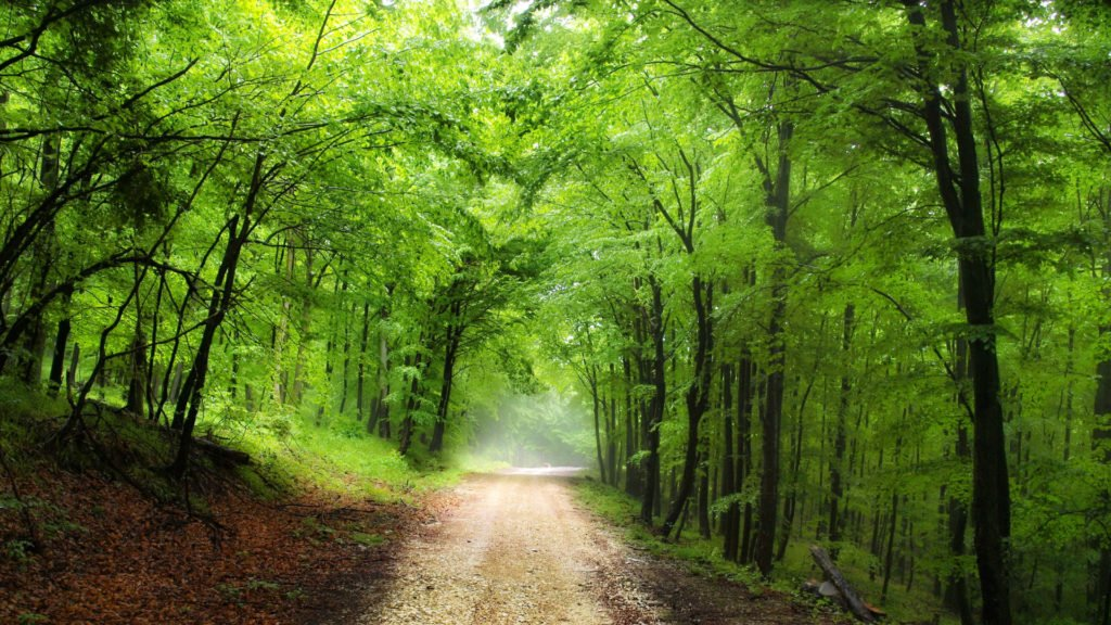 Sentier forestier à Rambouillet