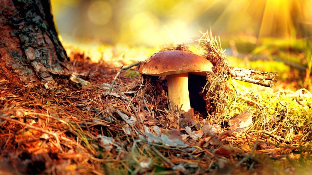 Champignon dans les sous-bois