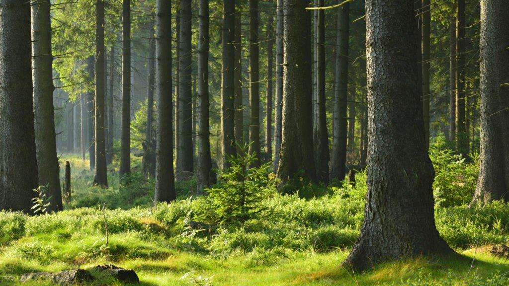En forêt, adoptez les bons réflexes.