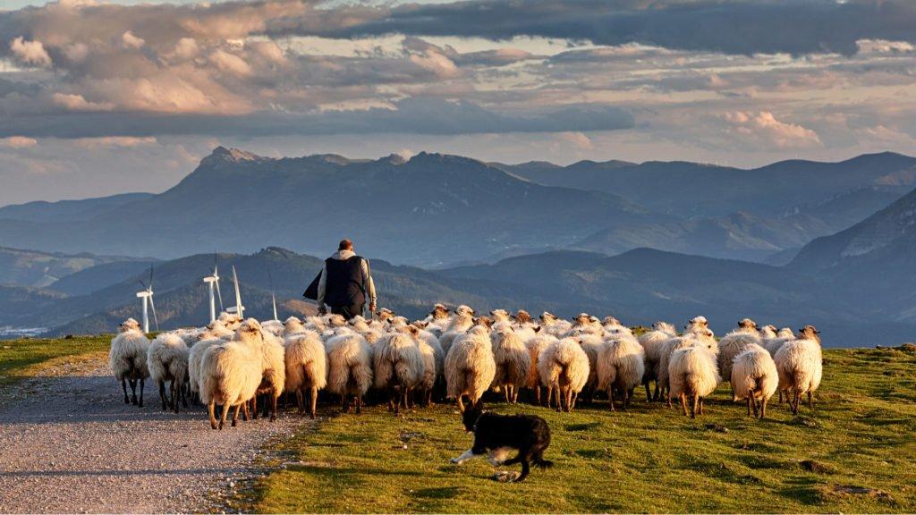 Berger au Pays Basque