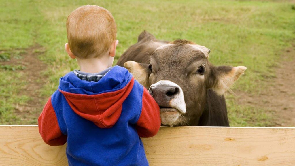 Jeune garçon avec les animaux de la ferme