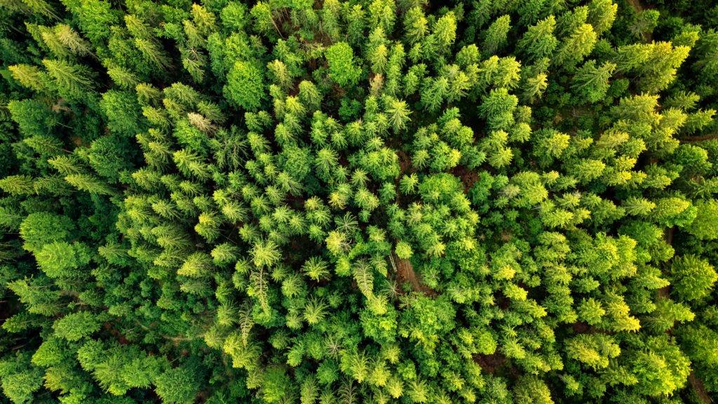 Les sons des forêt du monde entendus sur la canopé