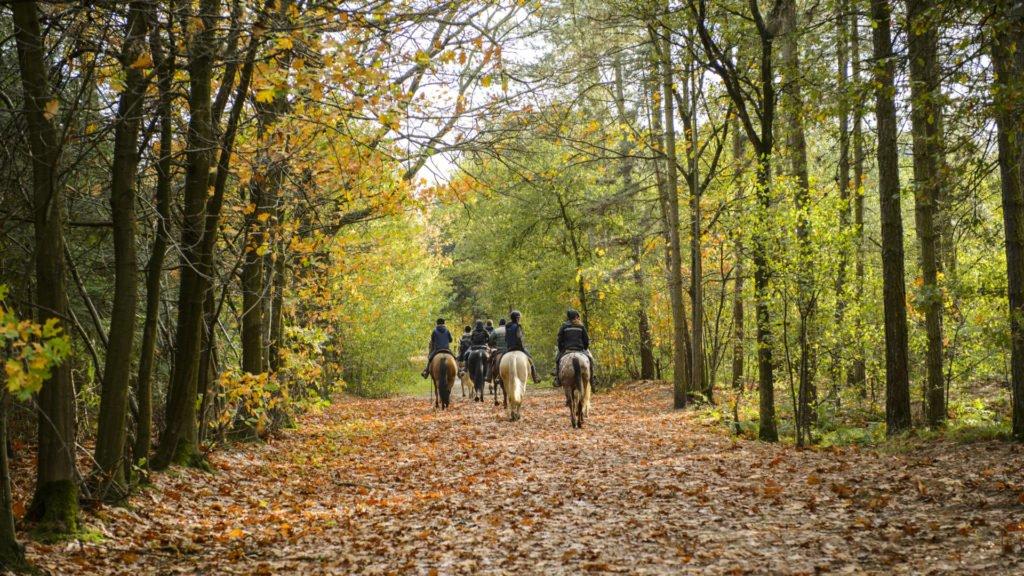 Balade à cheval en forêt de Rambouillet
