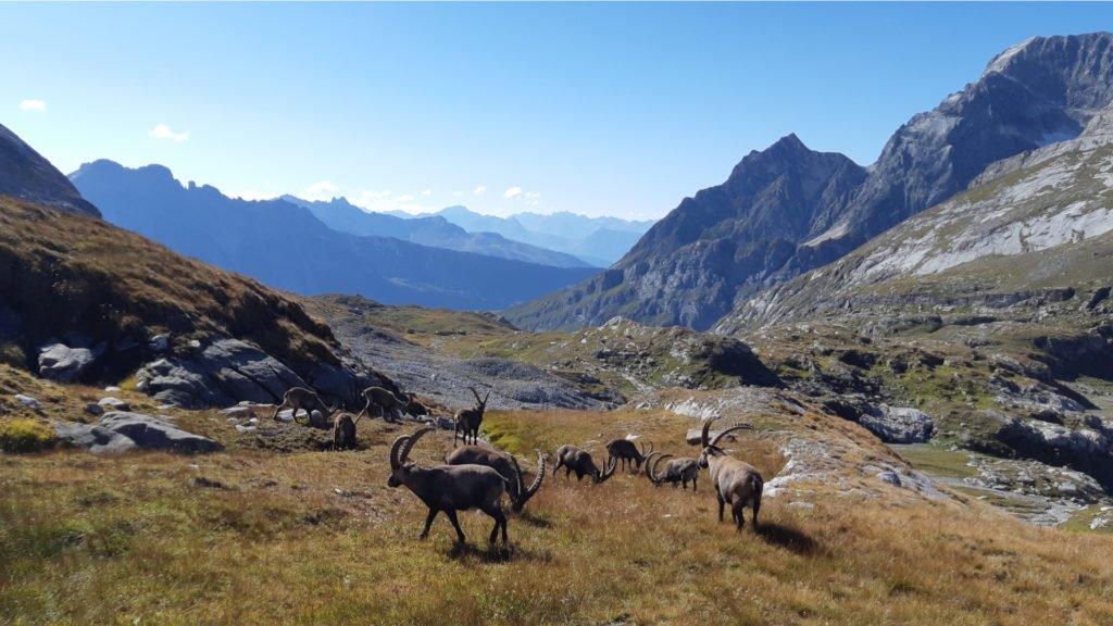 L'élevage sur le massif de la Vanoise