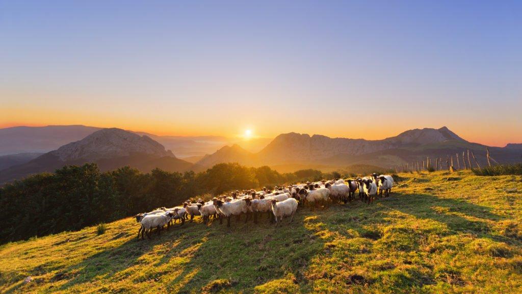 Montagnes et élevages du Pays Basque