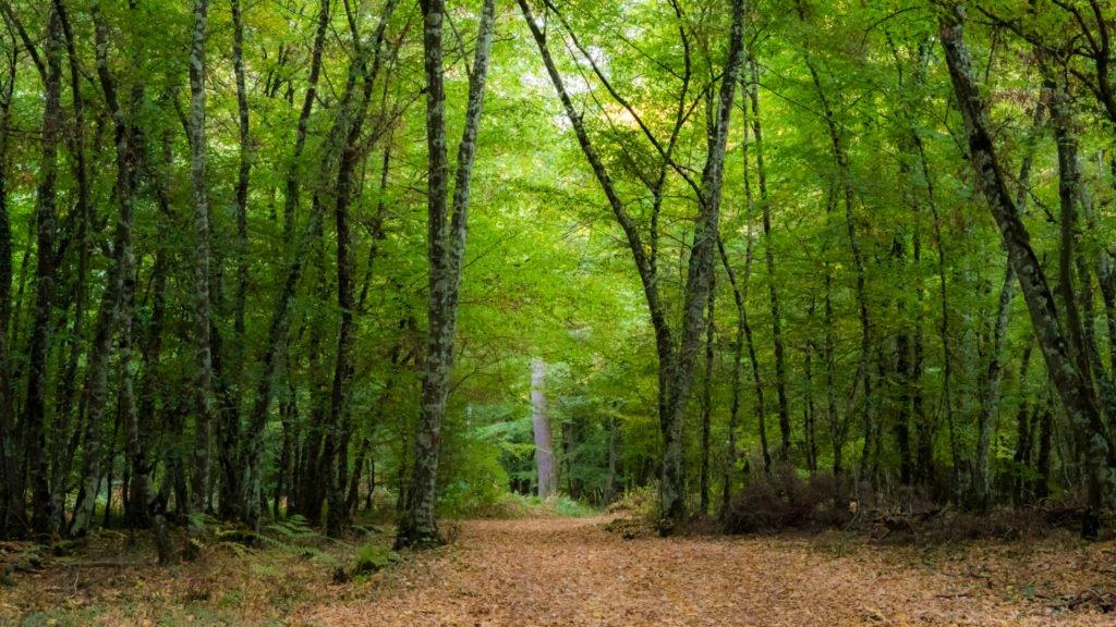 Forêt domaniale dans le Parc Naturel du Perche