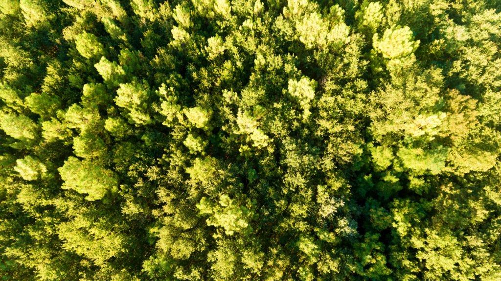 La forêt d'Orléans vue du ciel, l'un des sites naturels en Centre Val-de-Loire