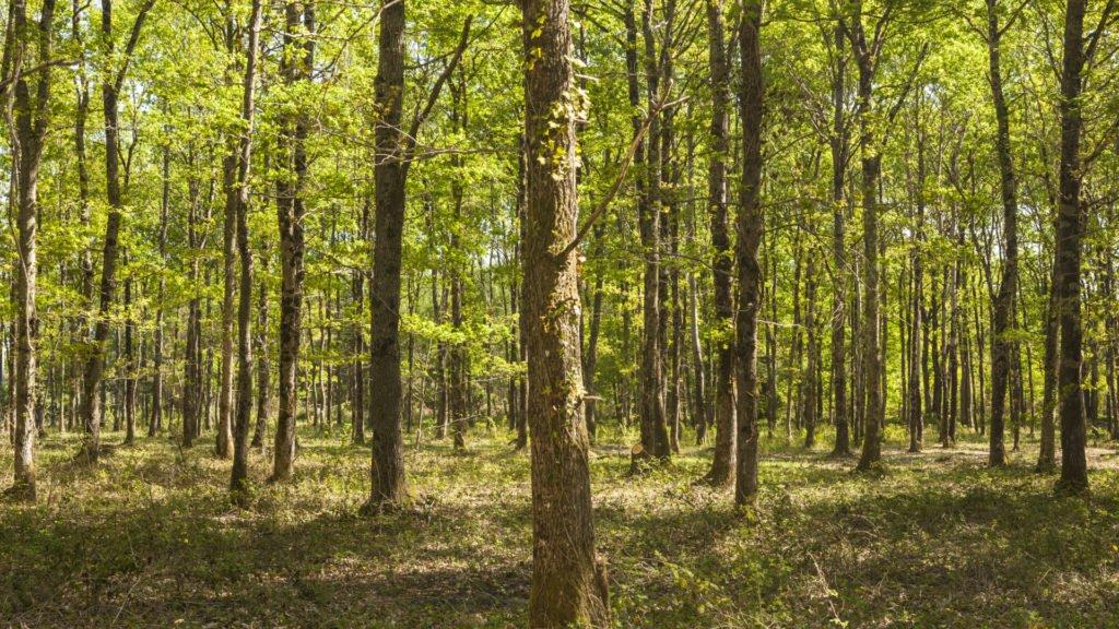 Promenade en forêt en Sologne
