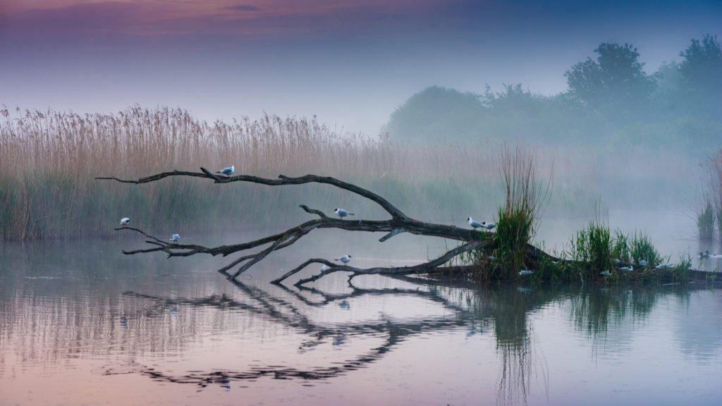 Au coeur du Parc Naturel de la Brenne, l'un des sites naturels en Centre Val-de-Loire