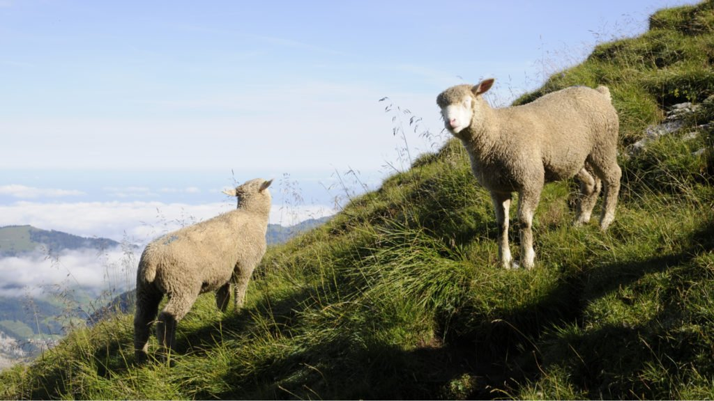 L'élevage dans le Parc National des Écrins